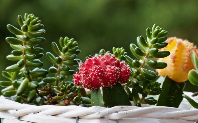 Top 10 Succulent Plants for Indoors