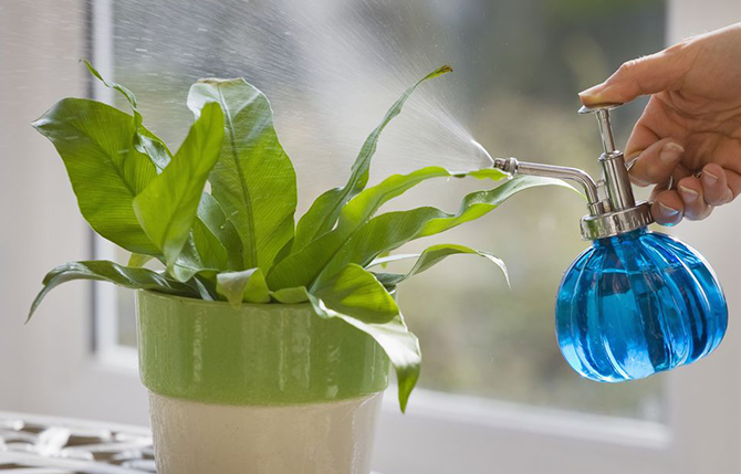 How to care for indoor plants in Dubai