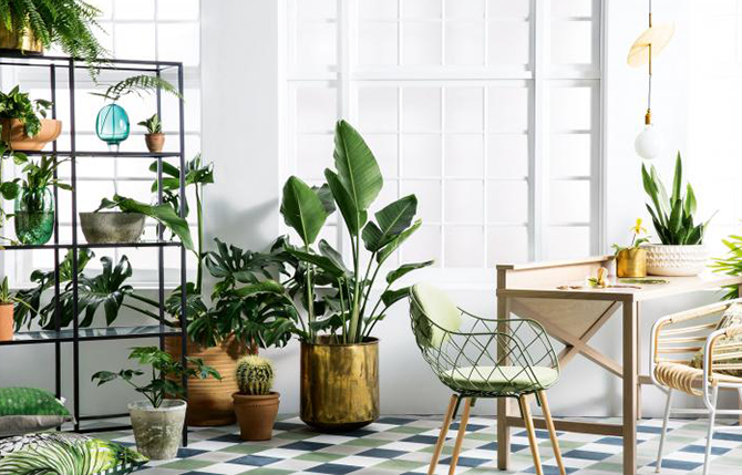 How to choose the perfect indoor plant in the interiors