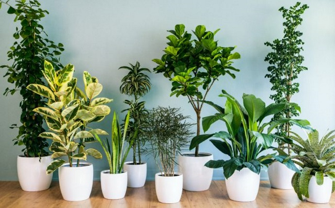 What are the Benefits of Indoor Plants