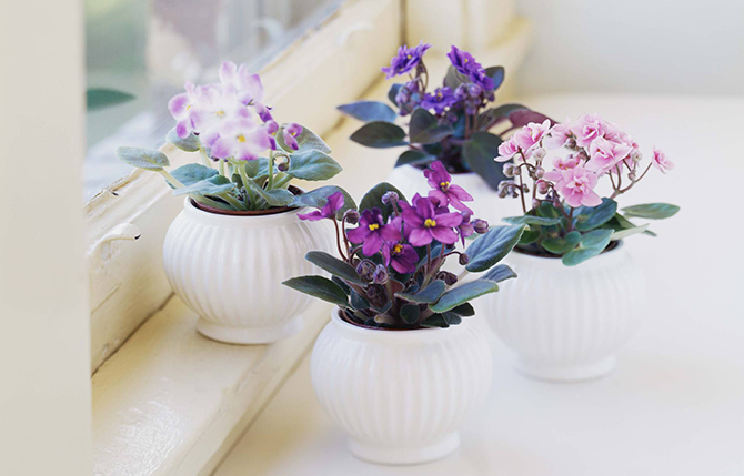 Stunning Flowering Indoor Plants You'll Fall In Love With