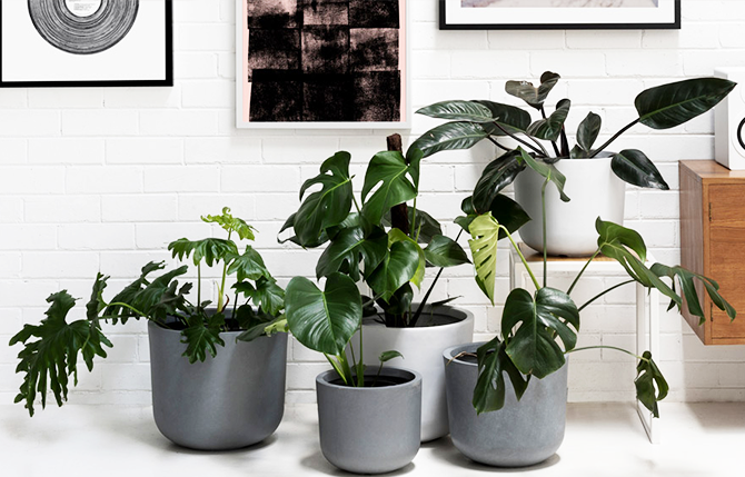 5 Indoor Plants That Improve Overall Health and Wellness
